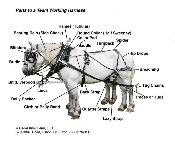 Harness-parts