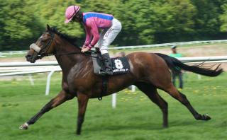 Racehorse_by_Breathless_dk